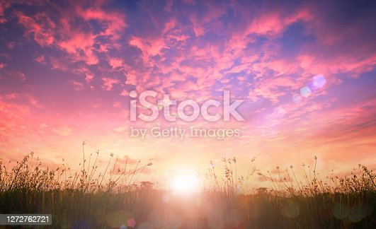 Meadow and sky sunrise landscape background
