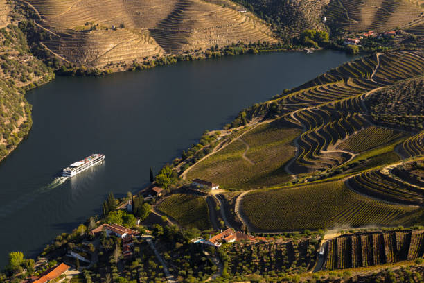 UNESCO World Heritage, the Douro Valley beautiful endless lines of Vineyards. UNESCO World Heritage, the Douro Valley beautiful endless lines of Vineyards, in Sao Joao da Pesqueira, Viseu, Portugal. duero stock pictures, royalty-free photos & images