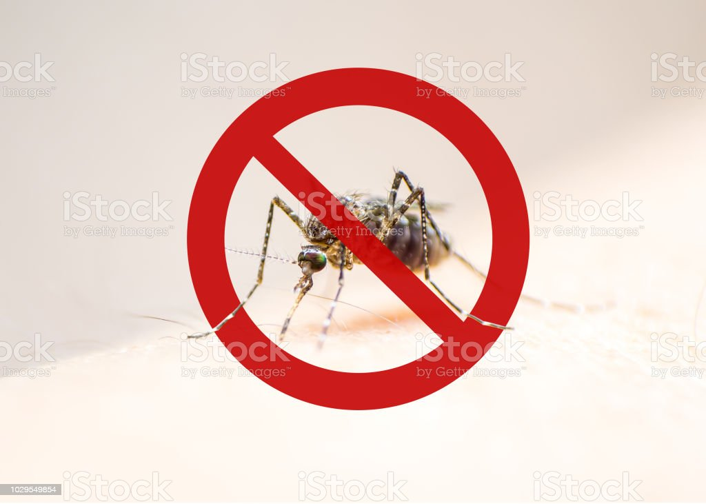 World malaria day with no mosquito sign for prevention of virus carrier insect spreading Aedes aegypti, yellow fever, dengue, chikungunya, Zika, Mayaro, Malaria, flavi epidemic disease stock photo