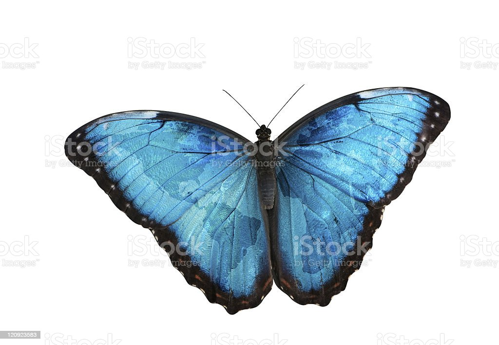 World map on butterfly wings stock photo