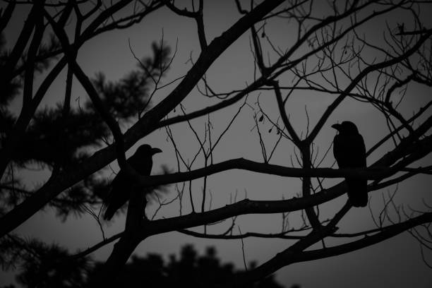 World of crow and monotone World of crow and monotone. Shooting Location: Japan: Yokohama 恐怖 stock pictures, royalty-free photos & images