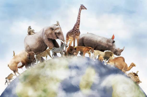 värld av vilda djur - art bildbanksfoton och bilder