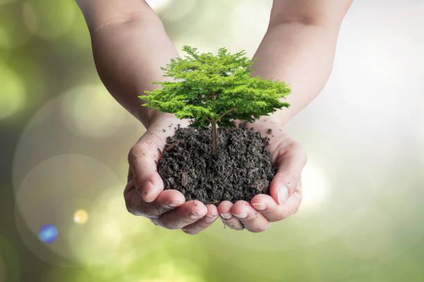 världsdagen för mark och miljö koncept med trädplantering på matjord - biologisk mångfald bildbanksfoton och bilder