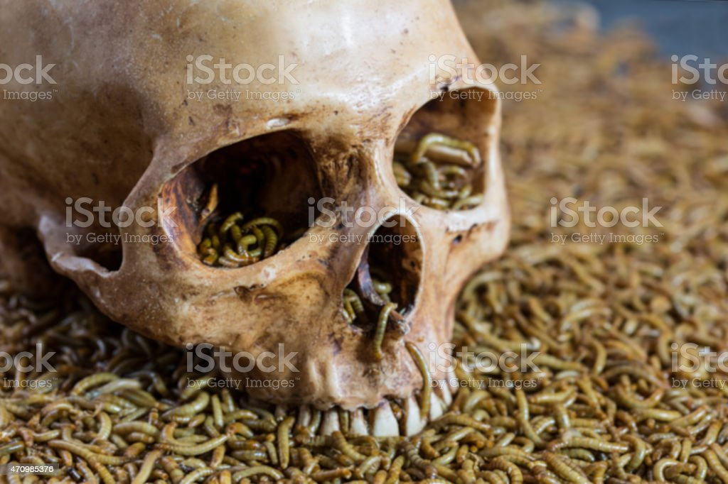 Worm and skull, on blurred style stock photo