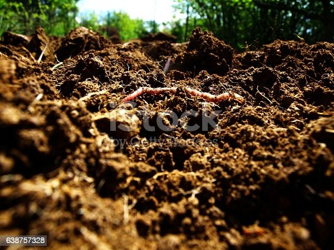 Useful worm comes up from the fresh earth