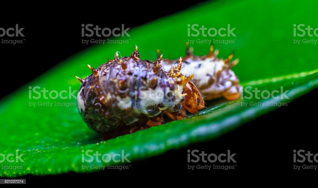 worm eating the leaves stock photo