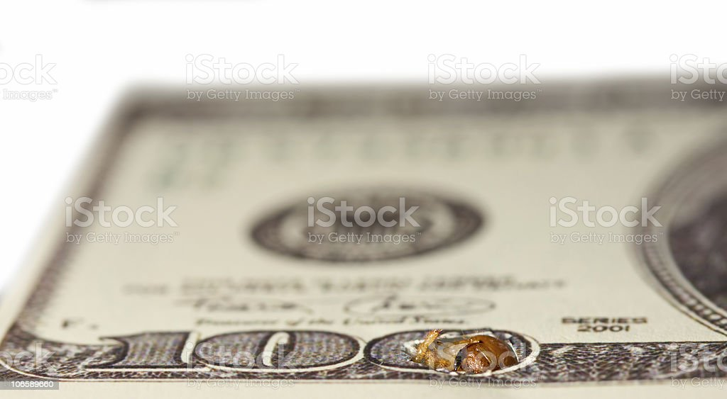 Worm gnaw through dollar bank note. Stage one stock photo