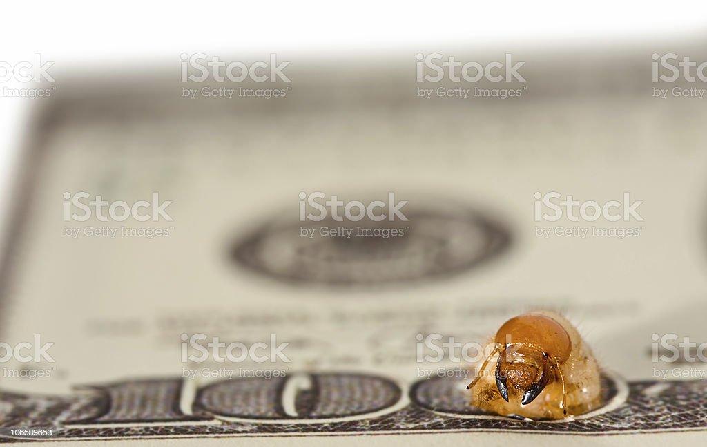 Worm gnaw through dollar bank note. Stage three stock photo