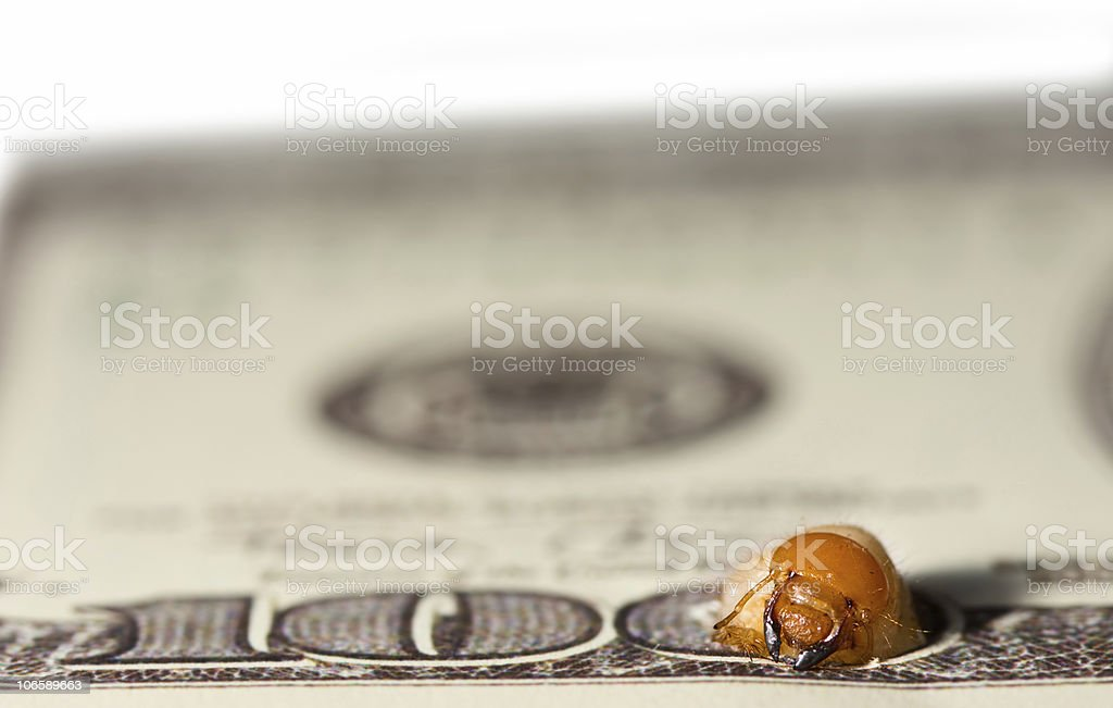Worm gnaw through dollar bank note. Stage two stock photo