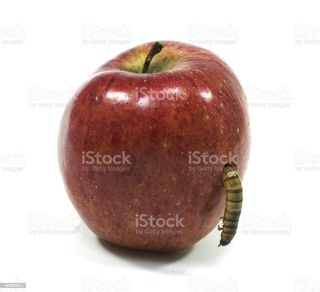 worm is coming out of bitten apple stock photo
