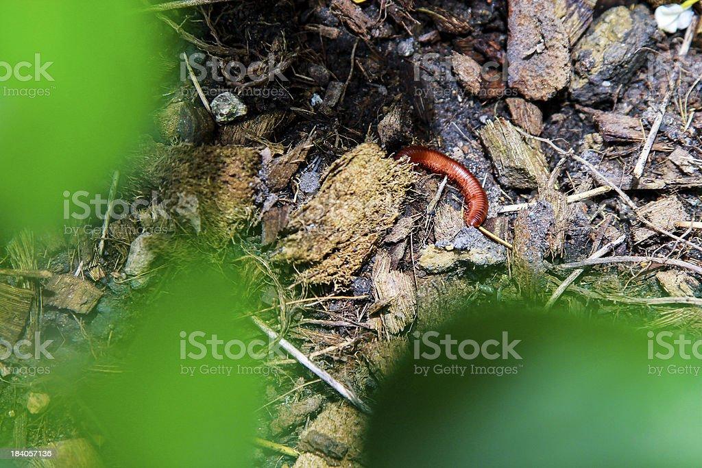 worm royalty-free stock photo