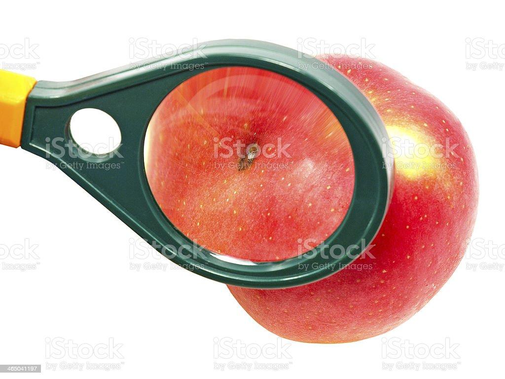 Worm-eaten apple under magnifying glass. stock photo