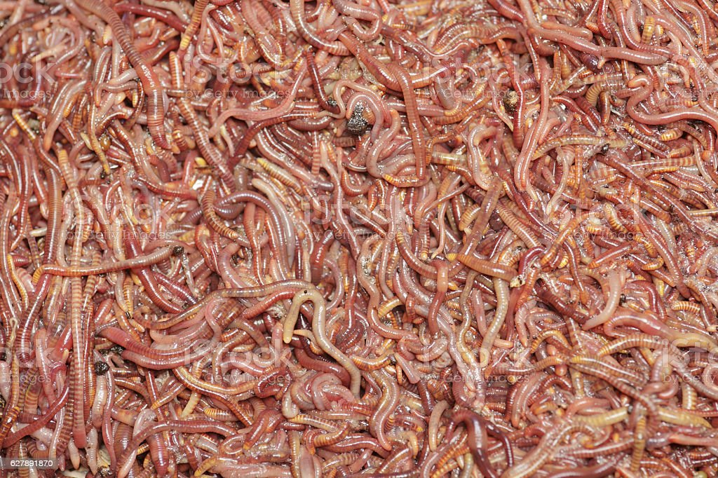 Worms extreme close up stock photo