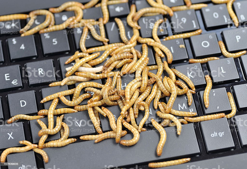 worms on compter keyboard royalty-free stock photo