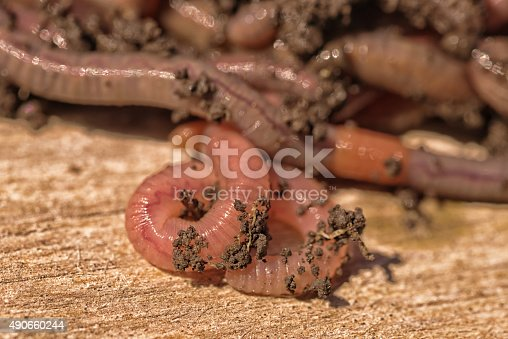 Macro of worms with dirt on their bodies.
