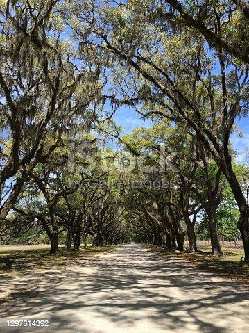 Wormsloe Historic Plantation Site - Savannah Georgia