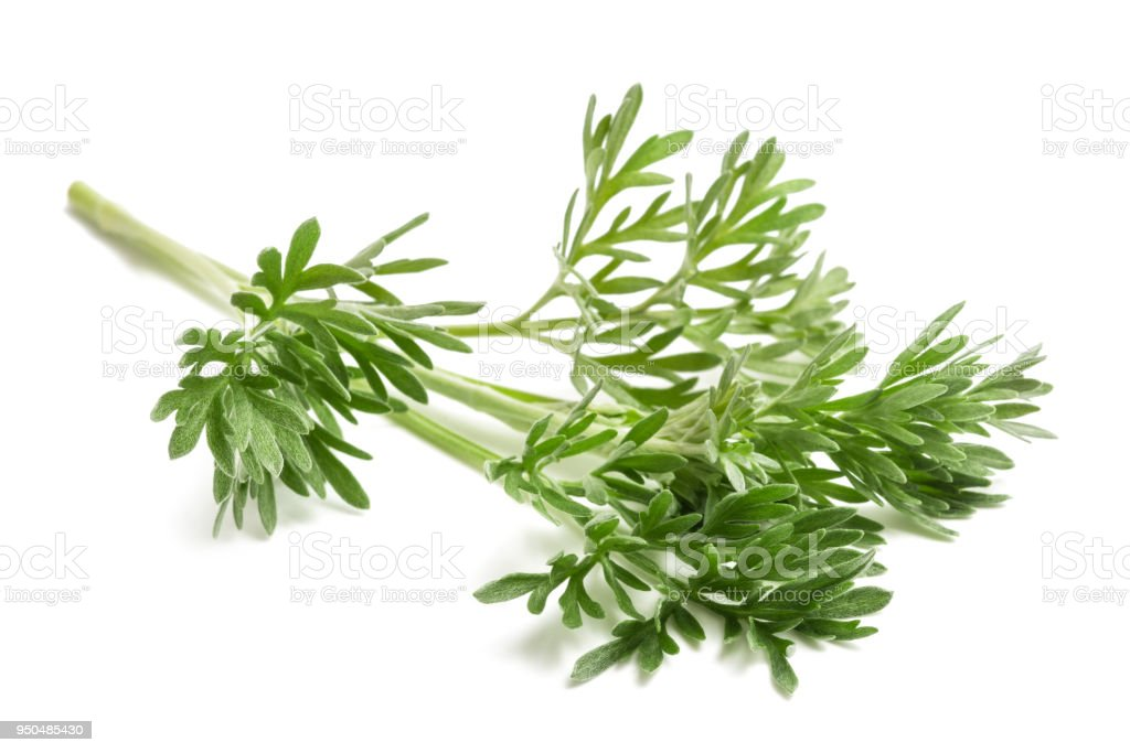 Wormwood Artemisia absinthium stock photo