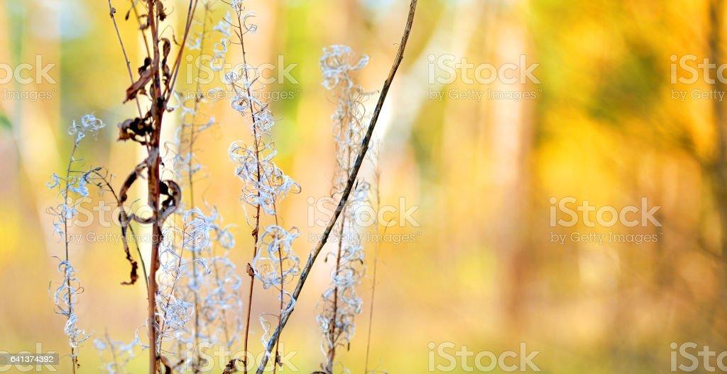 Wormwood in the autumn wood Стоковые фото Стоковая фотография
