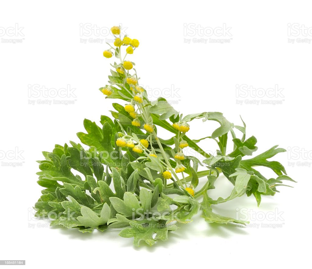 Wormwood with Flowers stock photo
