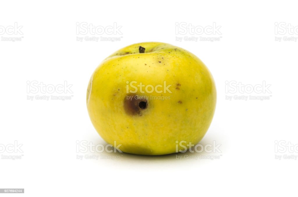 Wormy apple on white background stock photo
