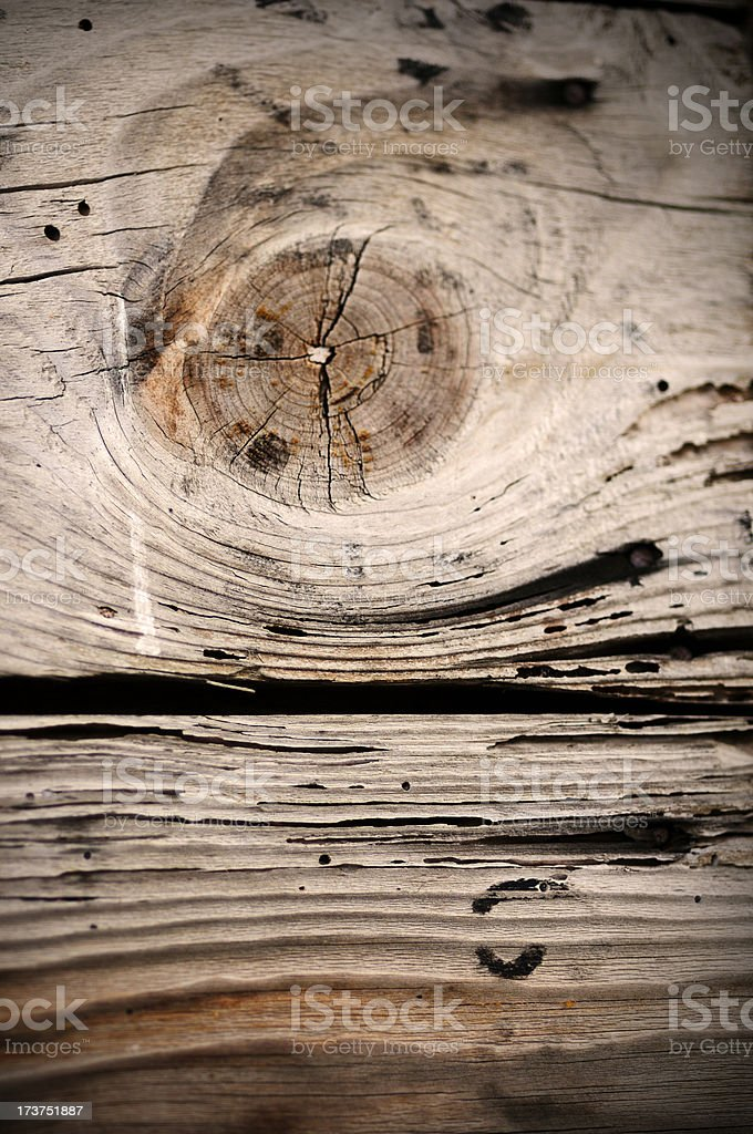 wormy crosscut log detail royalty-free stock photo