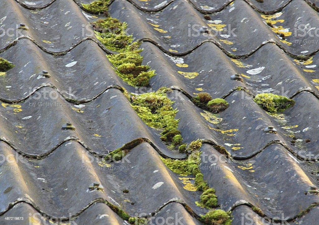 Usado Teto de fibra de cimento com diferentes alga - foto de acervo