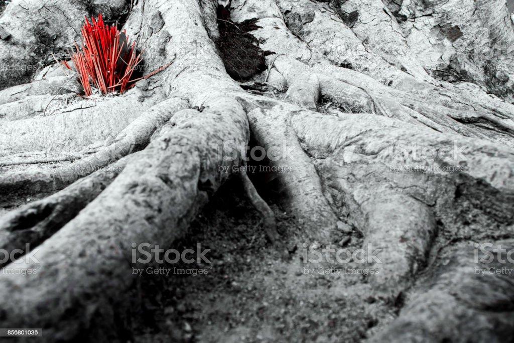 Adorar con incienso con raíces de árbol de banyan - foto de stock