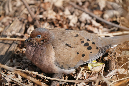 wounded suffering bird