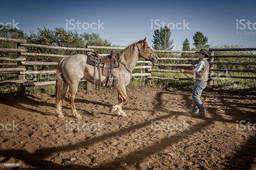 Wrangler Training a Horse royalty-free stock photo