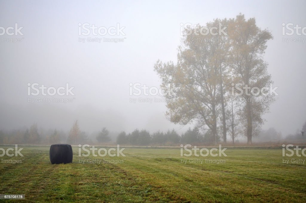 Wrapped in fog lonely tree in the middle of the field. royalty-free stock photo