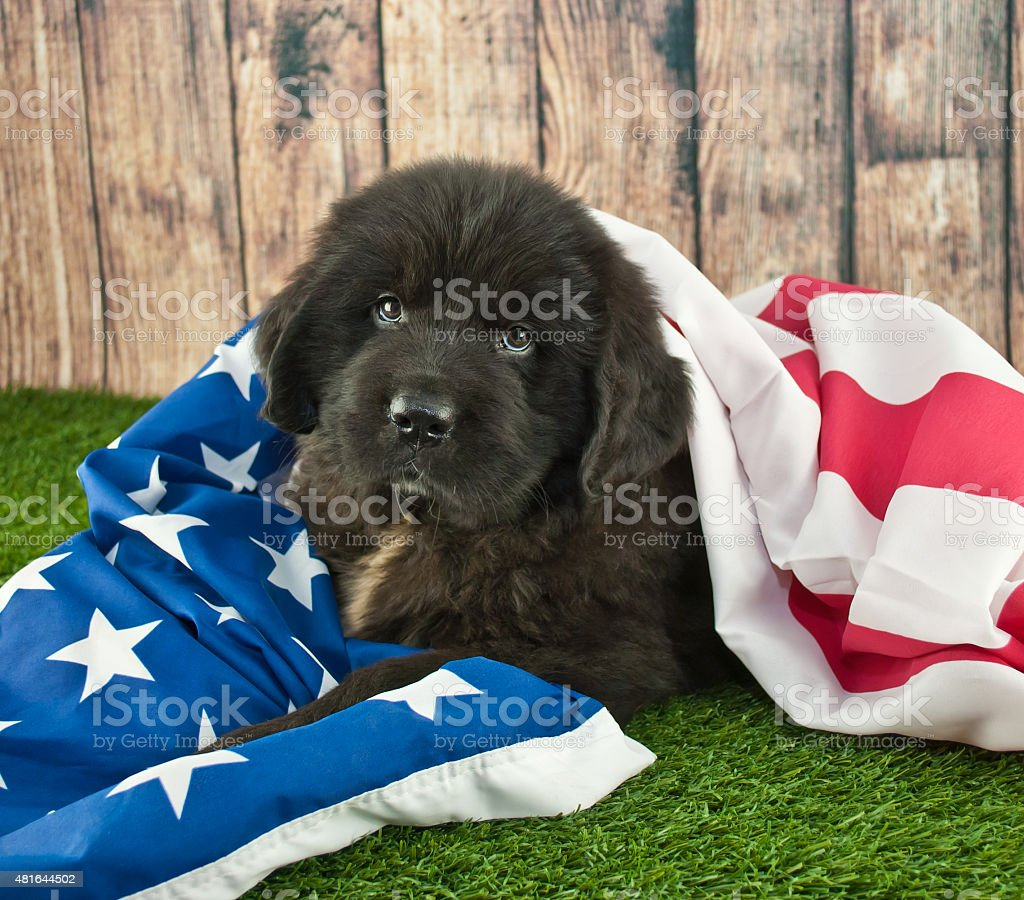 Wrapped Up In America. stock photo
