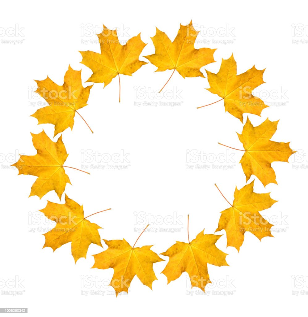 Wreath from dry orange maple leaves. Autumnal round frame on a white background. stock photo