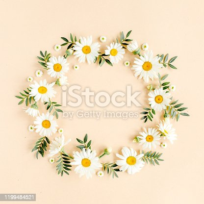Isolated white daisy. SEE ALSO MORE PHOTOS ISOLATED ON WHITE