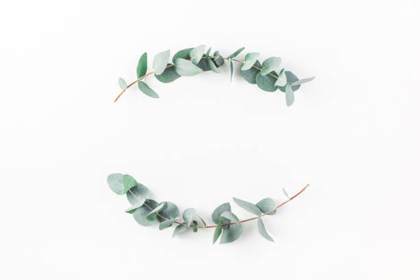Wreath made of eucalyptus branches. Flat lay, top view stock photo