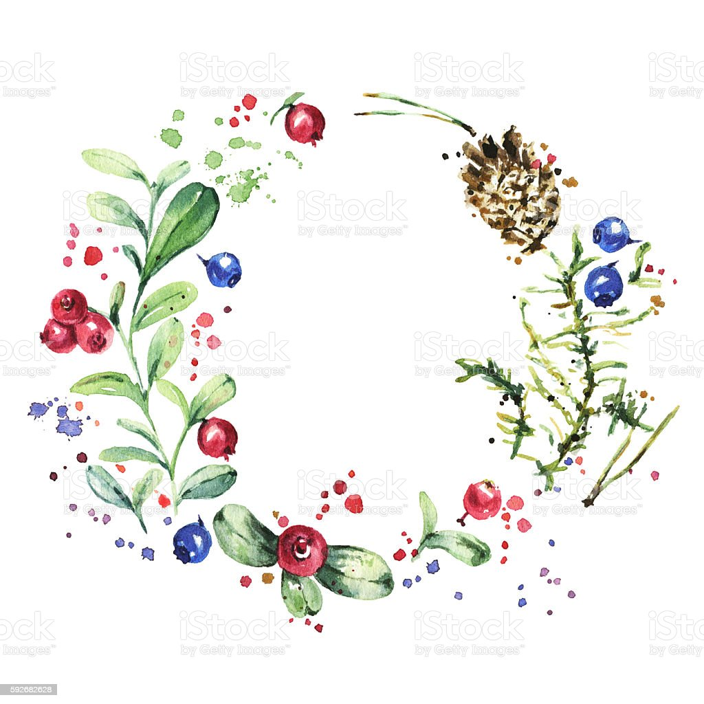 Wreath with wild berries isolated on white. Watercolor painting stock photo