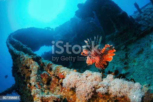 Underwater. Wreck diving Thistlegorm. Sea life, coral and Lionfish fish.