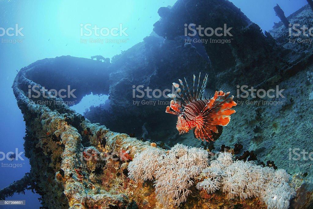 Wreck Diving - SS Thistlegorm stock photo