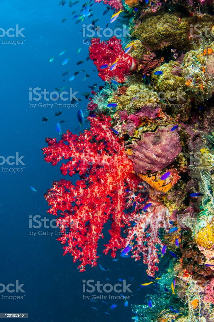 Wreck of Soft Coral stock photo