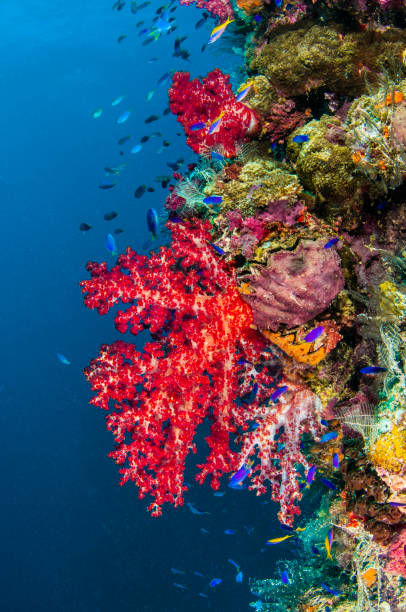 wreck of soft coral - wreck diving stock pictures, royalty-free photos & images