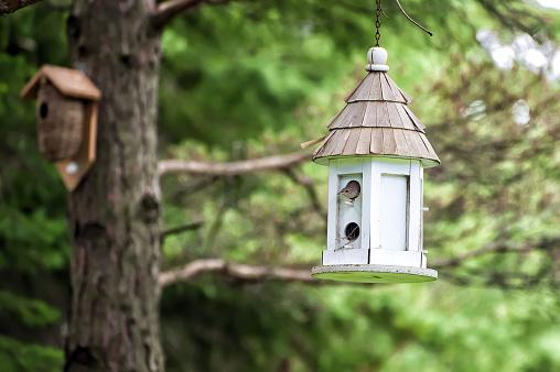 A wren peeking out of a birdhouse