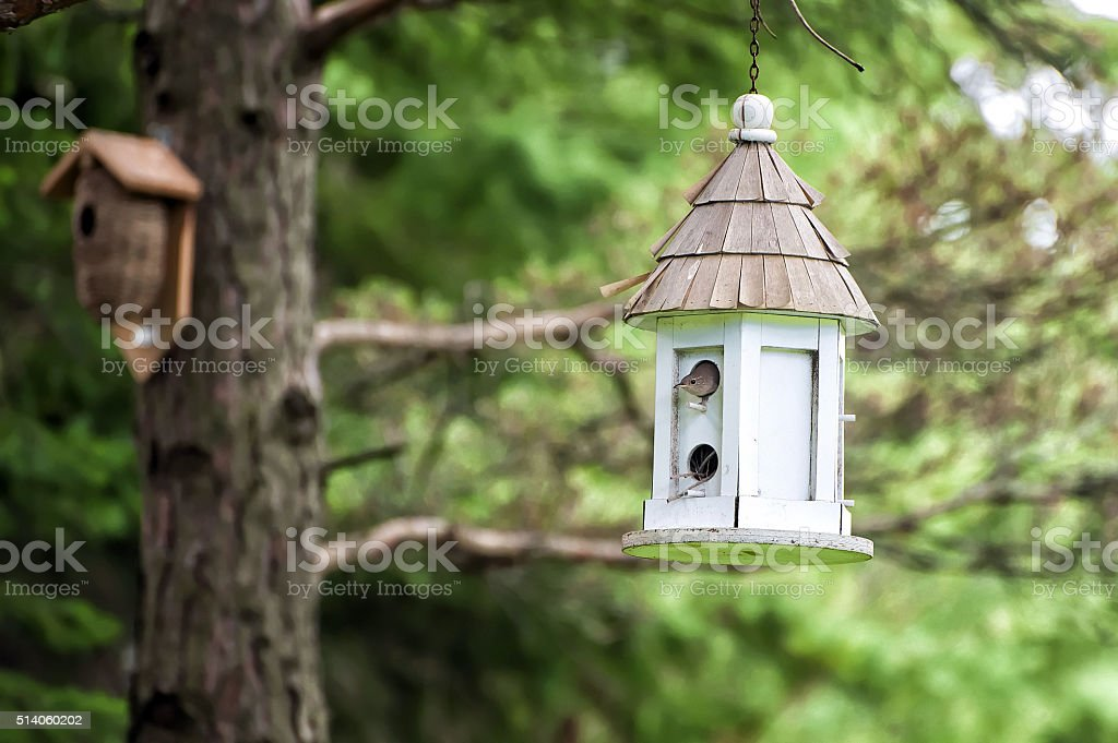 Wren in Birdhouse stock photo