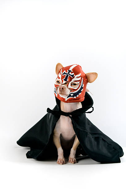 lucha libre - wrestling stock photos and pictures