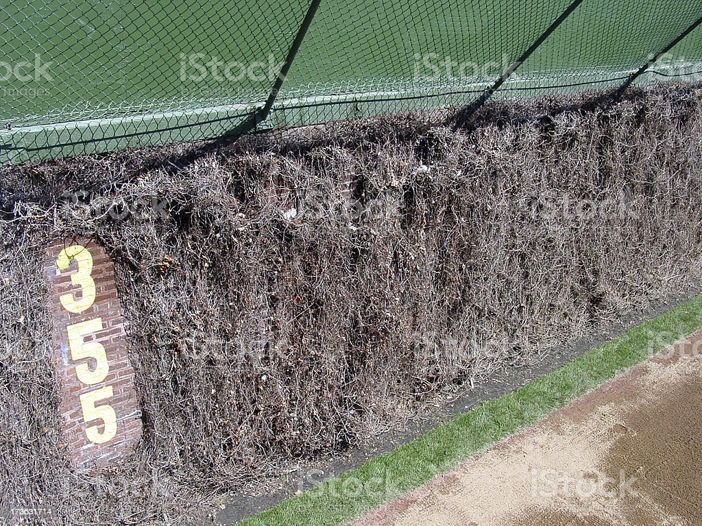 Wrigley field ivywall stock photo more pictures of absence istock wrigley field ivywall royalty free stock photo buycottarizona Images
