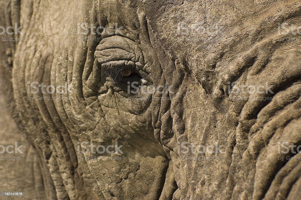 Wrinkled skin royalty-free stock photo