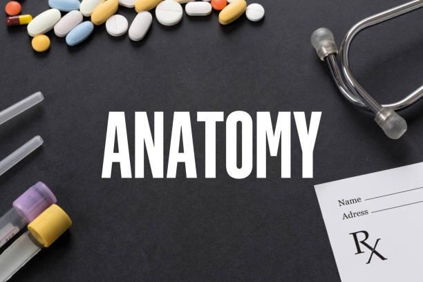 anatomie, geschrieben auf schwarzem hintergrund mit medikamenten - riesenblasen rezept stock-fotos und bilder