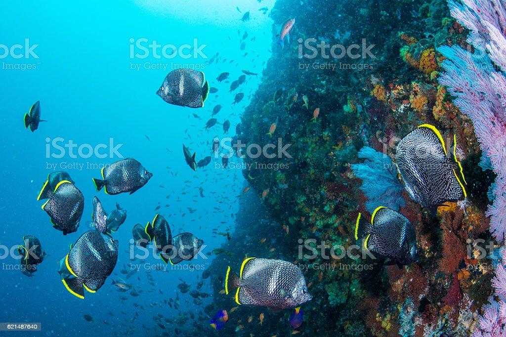 Wrought Iron Butterflyfish Lizenzfreies stock-foto
