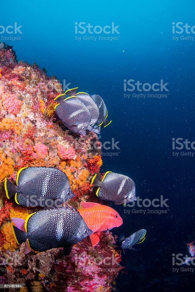 Wrought Iron Butterflyfish foto stock royalty-free