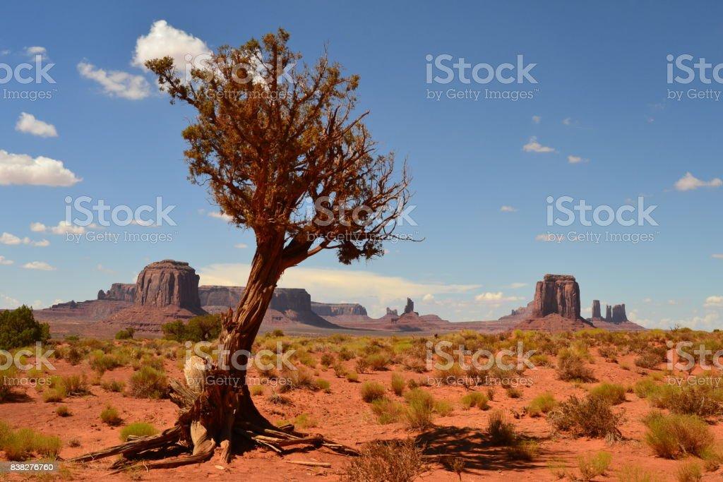 Wüstenbaum stock photo