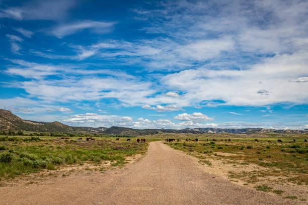Wyoming Cattle Herd stock photo