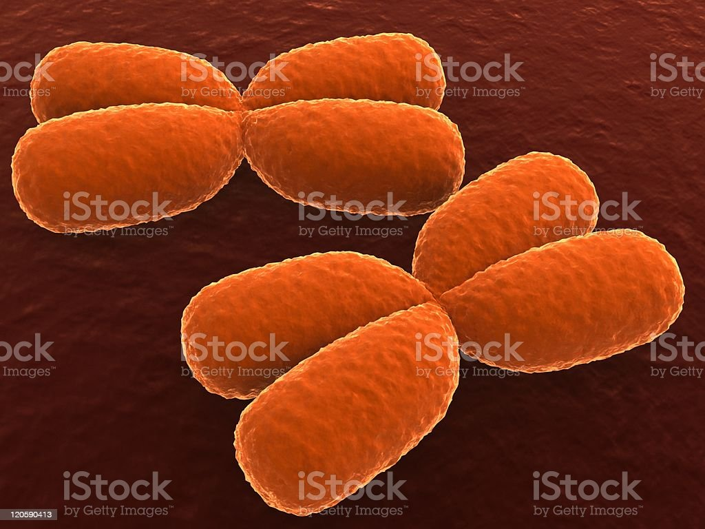 x chromosomes royalty-free stock photo